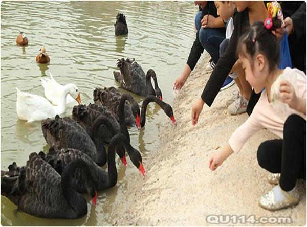 百鸟展租赁天下百鸟园展览部署白鸟养殖基地鸟园|鸟类09月06
